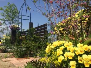 美しいお庭 青空が似合います